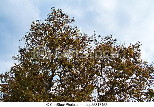 Tree Leaves in Autumn - csp25317458