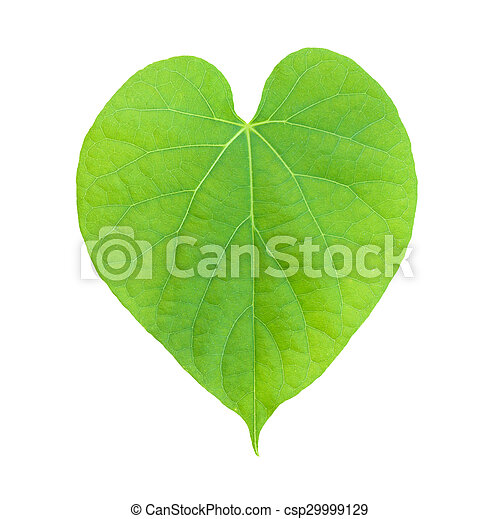 tree leaves isolated on white background - csp29999129