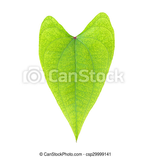 tree leaves isolated on white background - csp29999141