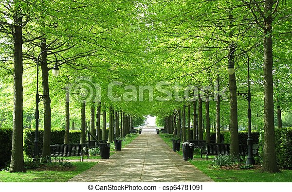 Tree lined walkway at the park - csp64781091