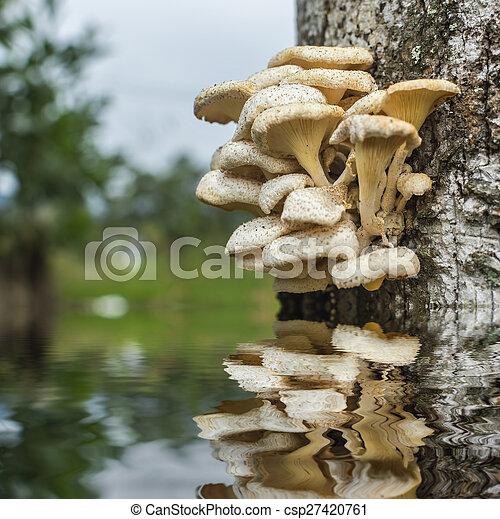 Tree mushroom - csp27420761