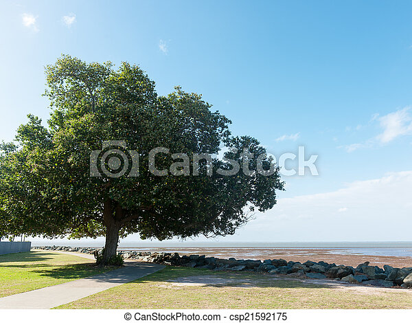 Tree near beach - csp21592175