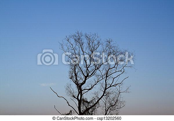 Tree of death. - csp13202560