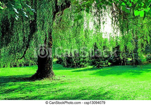 Tree of life - csp13094079