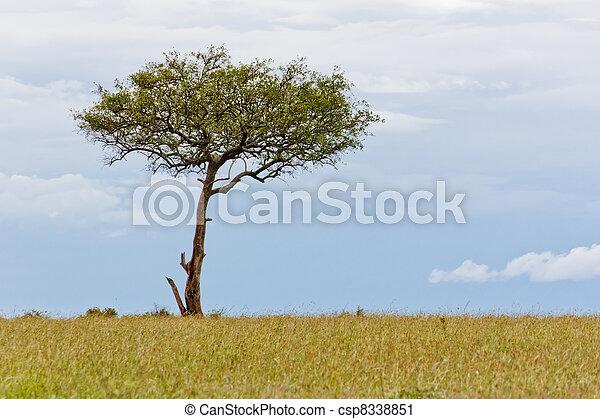 Tree of Life - csp8338851
