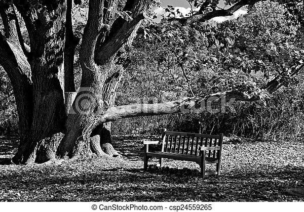 Tree of Life - csp24559265