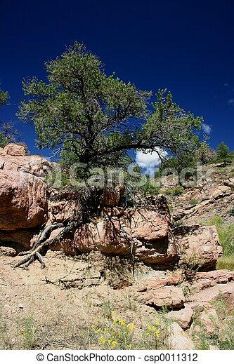 Tree of Life - csp0011312