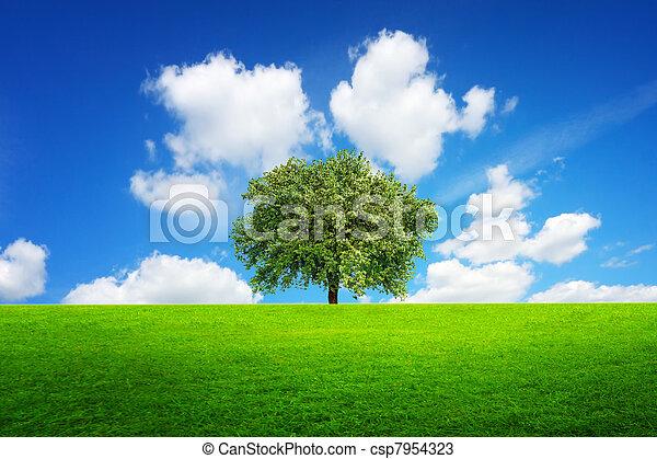 Tree of life - csp7954323