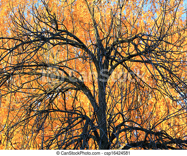 Tree on a background of yellow foliage - csp16424581
