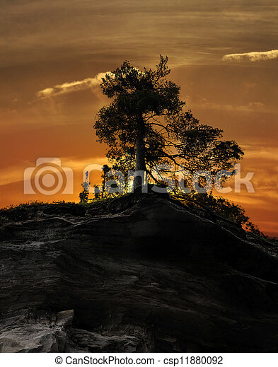 Tree On A Rocky Cliff - csp11880092