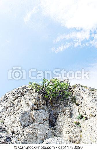 tree on blue sky background - csp11733290