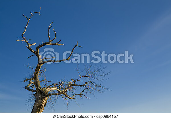 Tree on blue sky - csp0984157