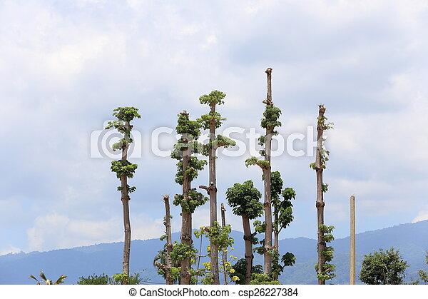 Tree on blue sky - csp26227384