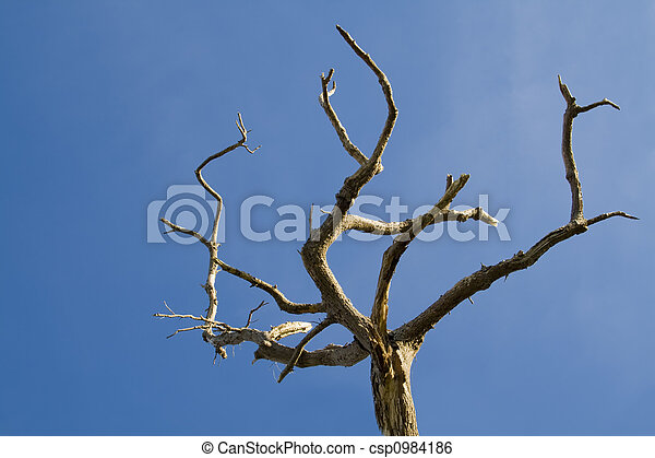 Tree on blue sky - csp0984186