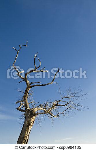 Tree on blue sky - csp0984185
