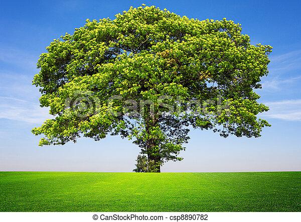 Tree on blue sky - csp8890782