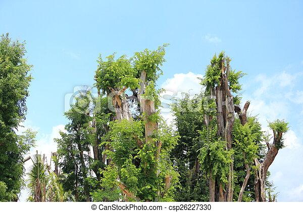 Tree on blue sky - csp26227330