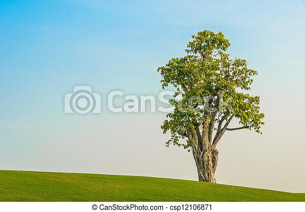 tree on grass field in blue sky - csp12106871