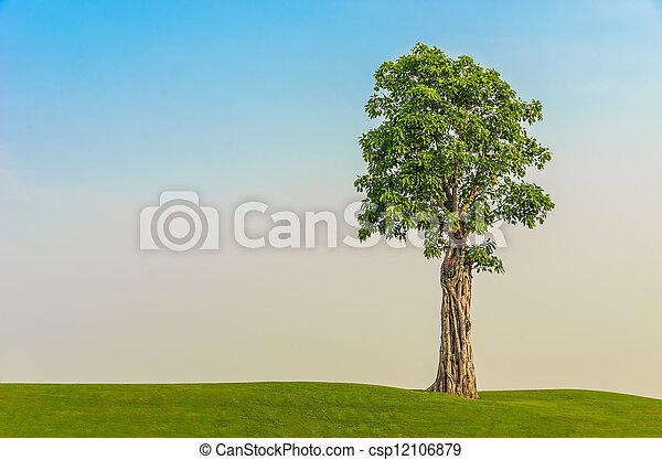 tree on grass field - csp12106879