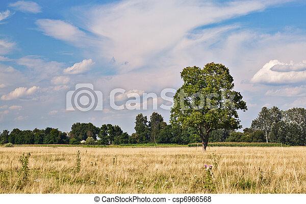 tree on grass - csp6966568