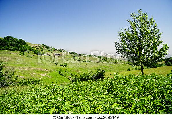 Tree on hill - csp2692149