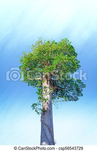 tree on sky background. - csp56543729