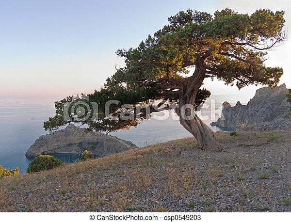 tree on sun rays - csp0549203