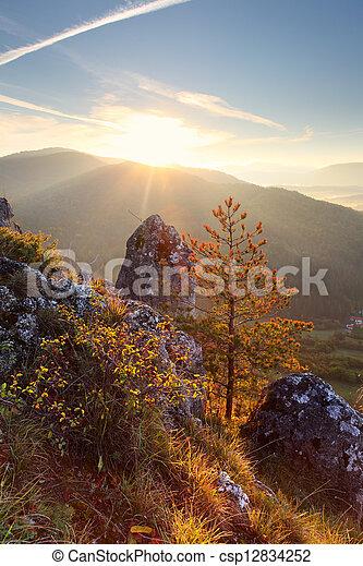 Tree on sunset in mountain - csp12834252