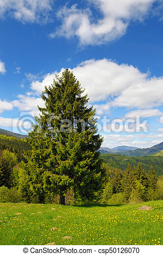 Tree on the background of the mountains - csp50126070