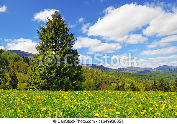 Tree on the background of the mountains - csp49936851