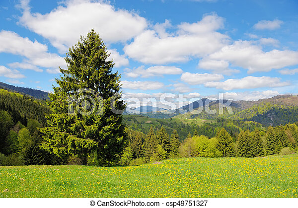 Tree on the background of the mountains - csp49751327