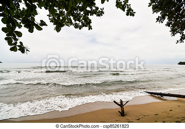 tree on the beach, photo as a background - csp85261823