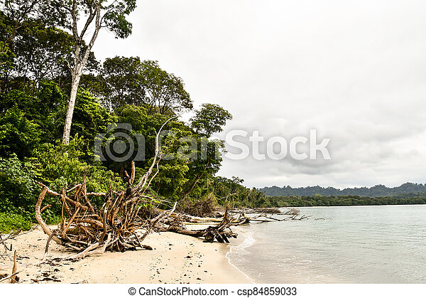 tree on the beach, photo as a background - csp84859033