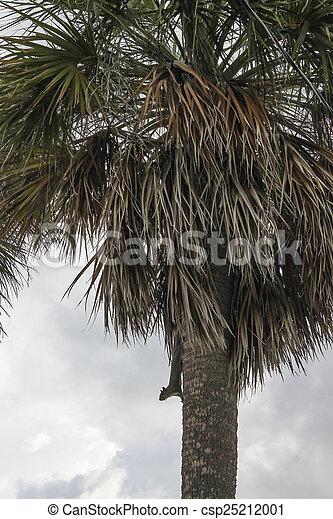tree on the beach - csp25212001
