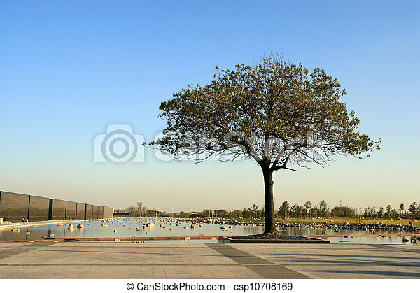 tree on the edge of a square - csp10708169