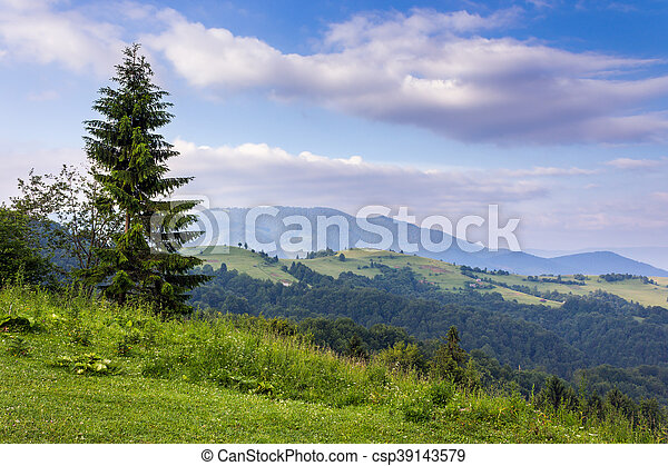 tree on the edge of clearing in mountains - csp39143579