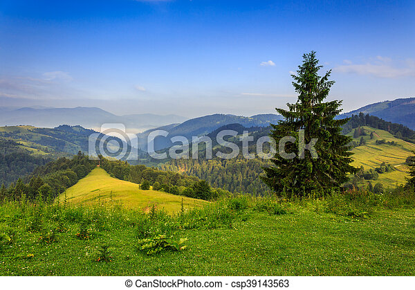 tree on the edge of clearing in mountains - csp39143563