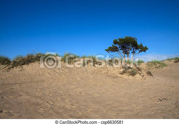 Tree on the edge - csp6630581