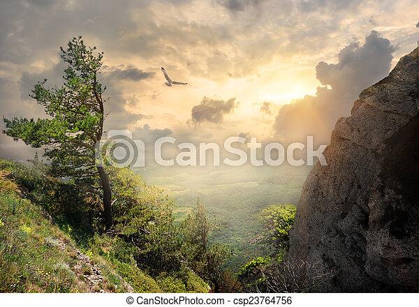 Tree on the mountain - csp23764756