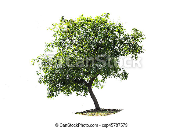 tree on the white background - csp45787573