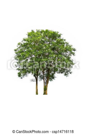 Tree on white background - csp14716118