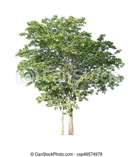 Tree on white background. - csp46574978
