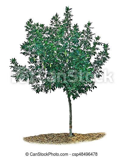 Tree on white background - csp48496478