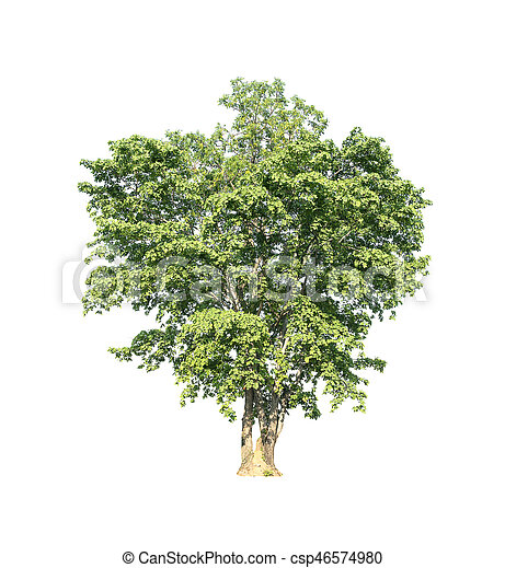 Tree on white background. - csp46574980