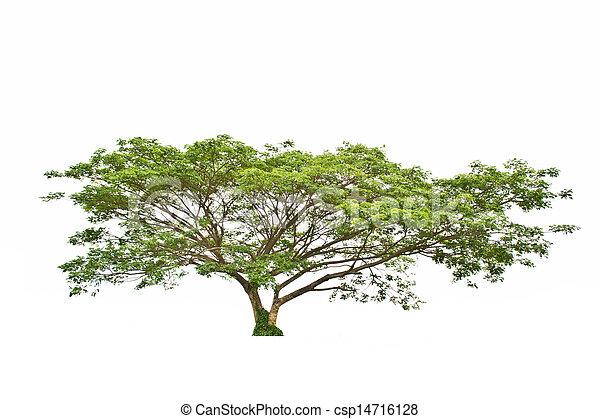 Tree on white background - csp14716128
