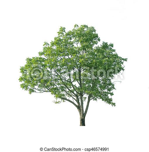 Tree on white background. - csp46574991