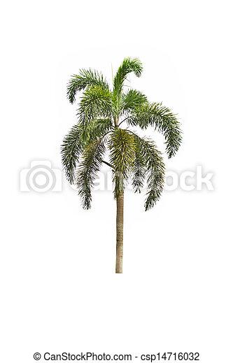 Tree on white background - csp14716032