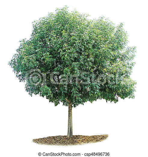 Tree on white background - csp48496736