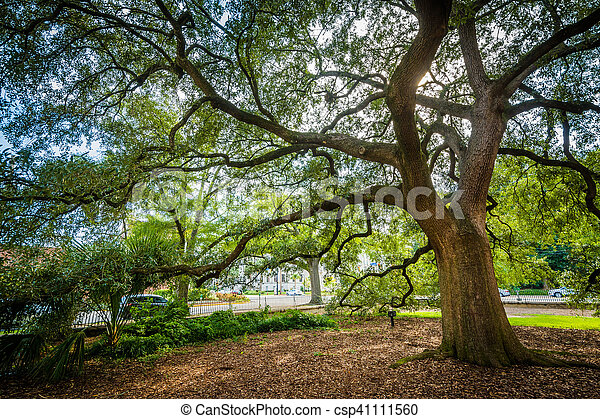 Tree outside the Trinity Episcopal Cathedral, in Columbia, South Carolina. - csp41111560