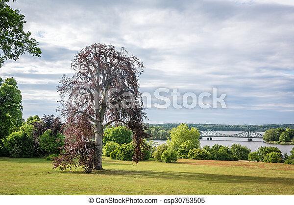 Tree photography, summer landscape - csp30753505